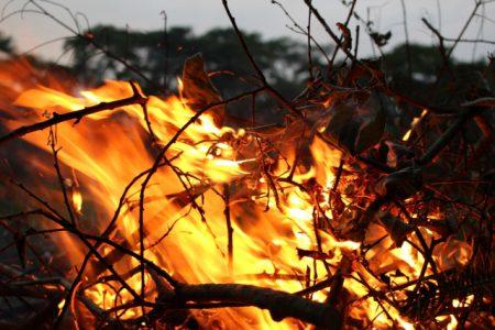 なぜ山火事は起こるのか