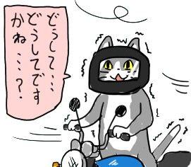 猫 どうして