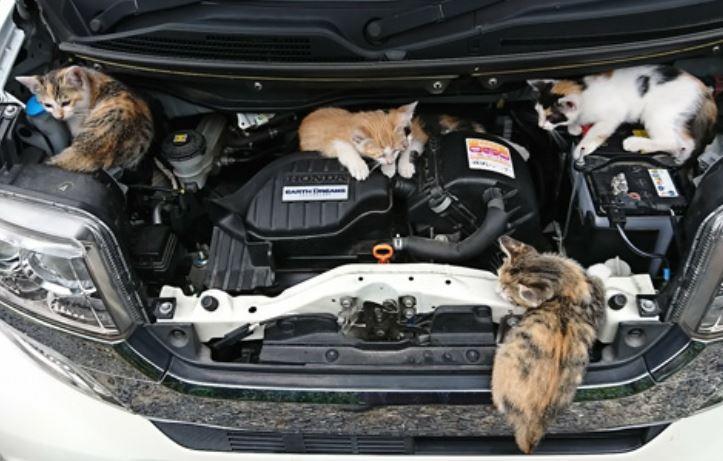 猫バンバンとは一体何なのか