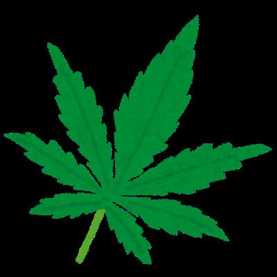 大麻(マリファナ)はなぜ違法なのか?医療用との違いは?