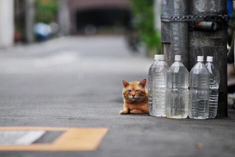 家の周りに置いてある水の入った大量のペットボトルの意味は?
