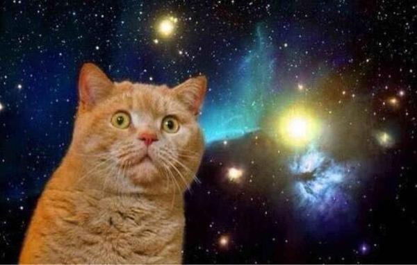 【大量画像】宇宙+猫のスペースキャットコラ画像まとめ